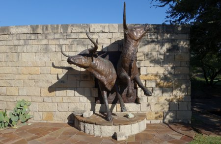 Cattle Sculpture at Frisco Central P...